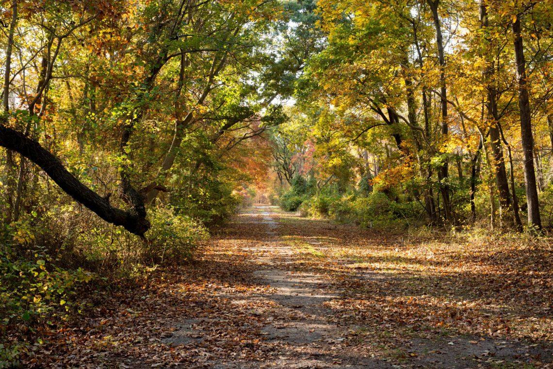 Long Island glänzt im goldenen Herbst